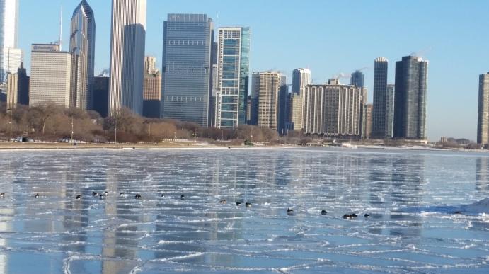Ducks on reflected skyline